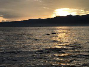 Bali - Lovina - Delfini