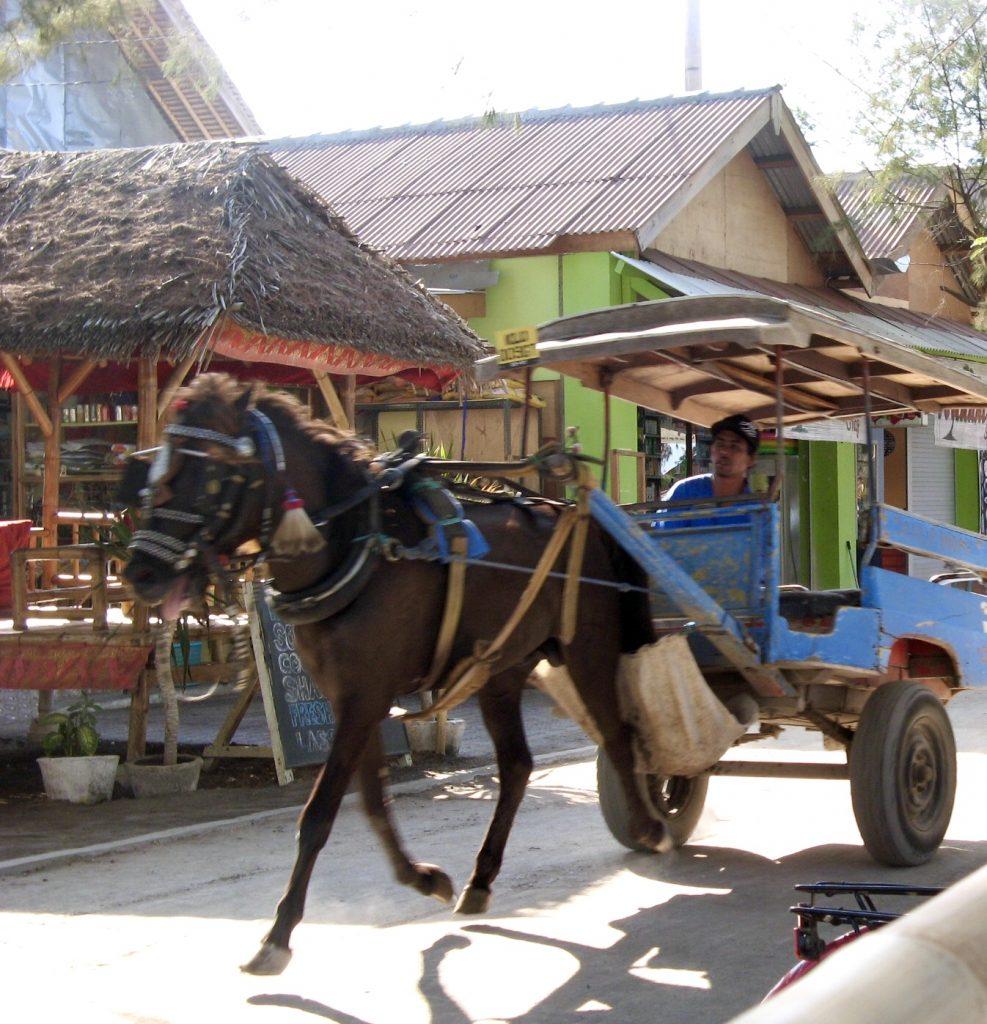 indonesia- isole gili - cidomo
