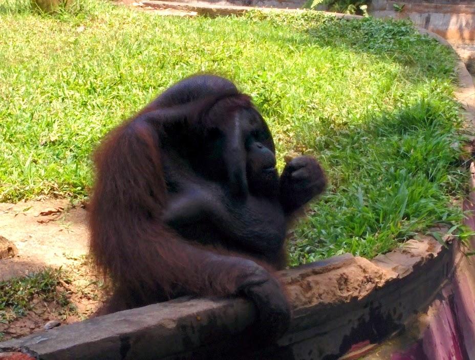 bali - zoo