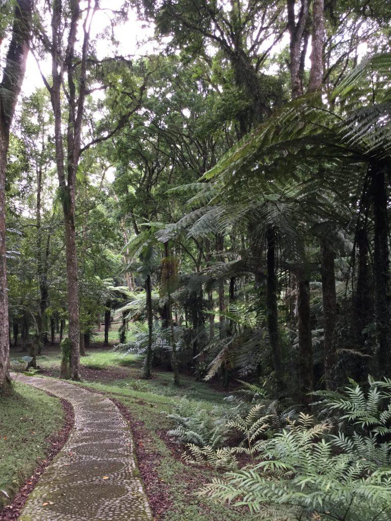 bali - bedugul - Botanical Gardens